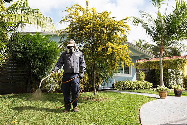 Technician performs weed control in South Florida yard.