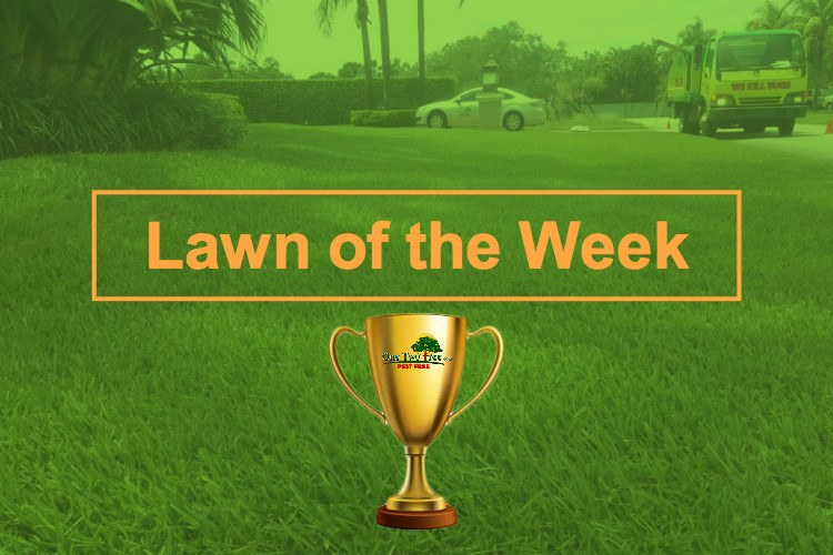 lawn of the week