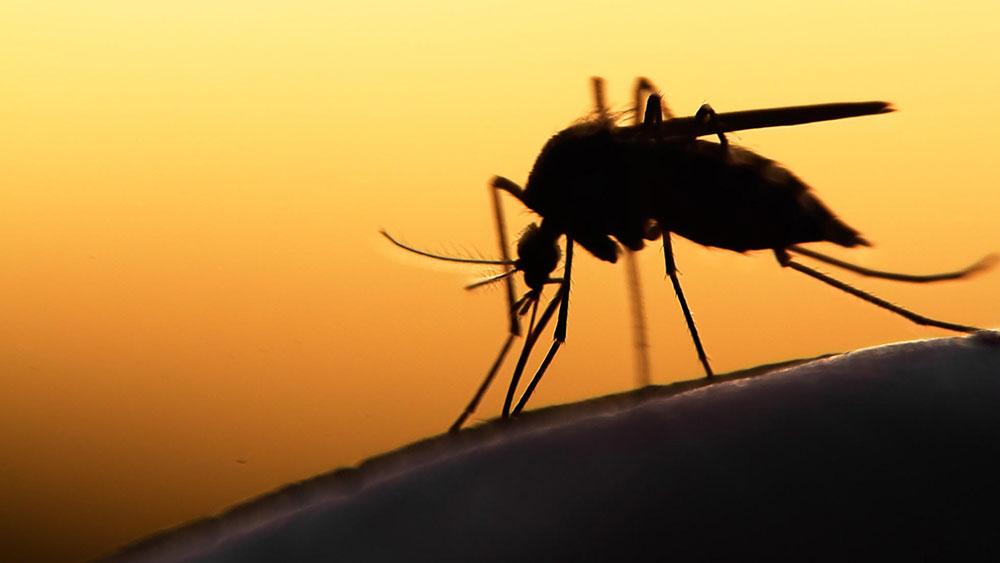 mosquito-1-1