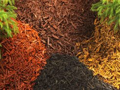 Mulch is an inexpensive method od weed control in South Florida.