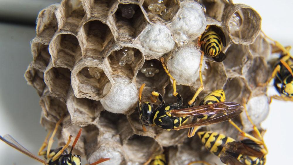 ott-bees