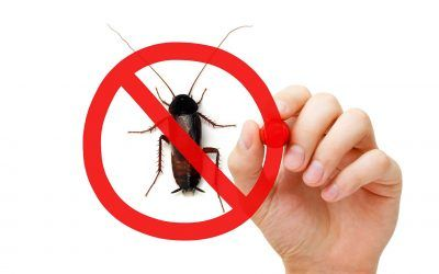 How to Get Rid of Roaches in South Florida