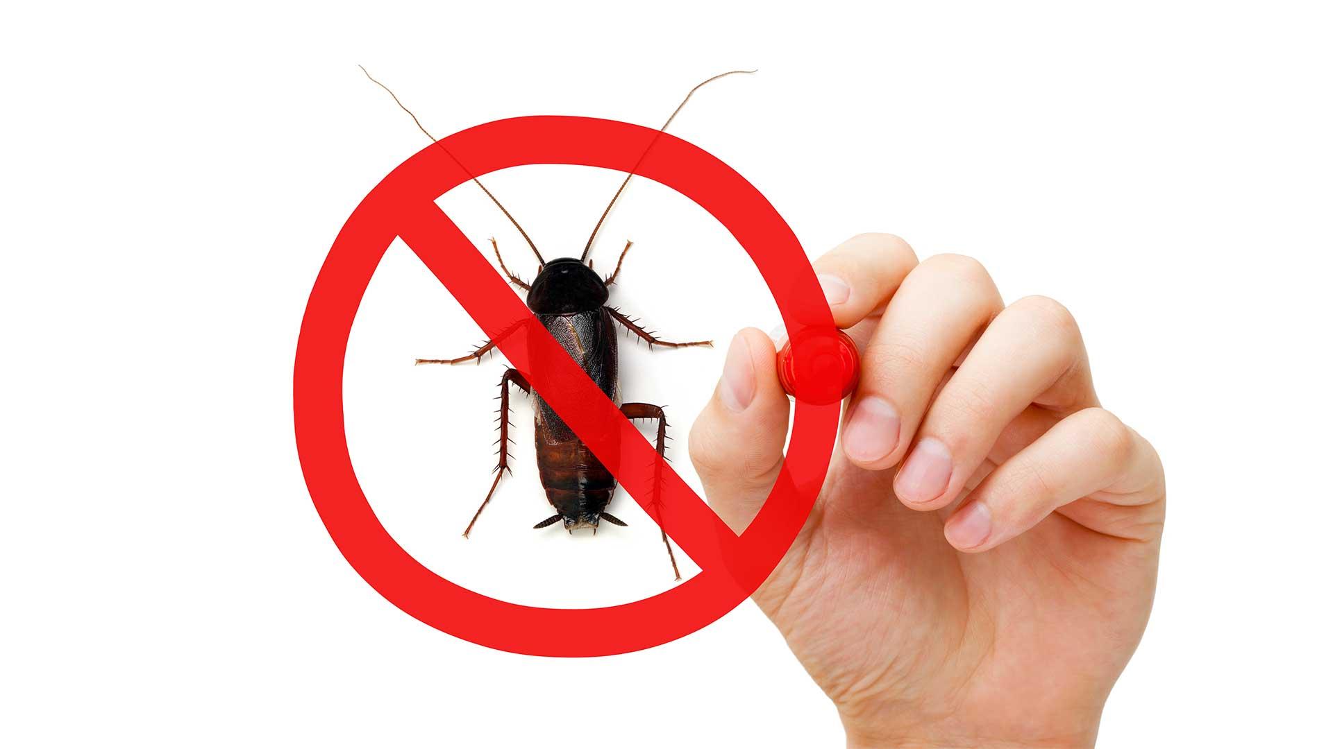pest-control-post