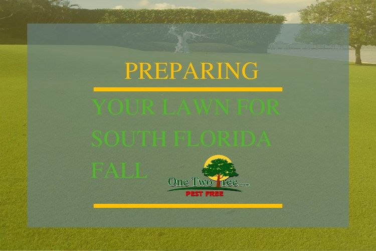 Preparing Your Lawn for South Florida Fall
