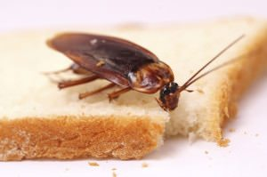 Pests like cockroaches can leave germs and pathogens behind.