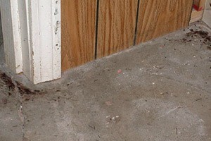 Rodent urine trails in South Florida homes are indicative of rodent infestation.