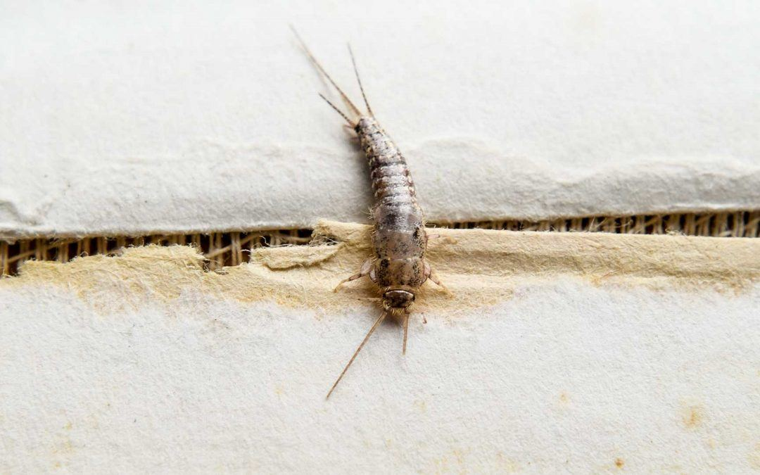 How to Stop Silverfish From Taking Over Your