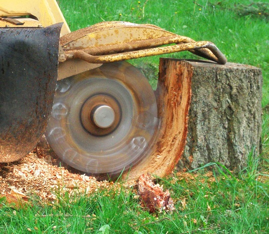 What is stump grinding? It is the controlled removel of a stump by using specialized cutting machinery.stup