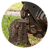 Stump removal is the complete extraction of a tree stump and roots.