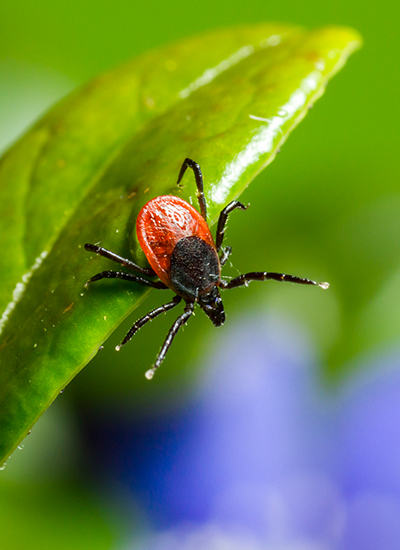Protect yourself from ticks by removing them from your yard and body quickly.