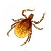 Tick control service in South Florida.