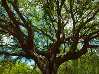Improper pruning of trees can cause problems that One Two Tree can solve.