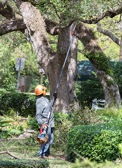 Tree trimming or pruning is a service best left to a professional due to risks involved.