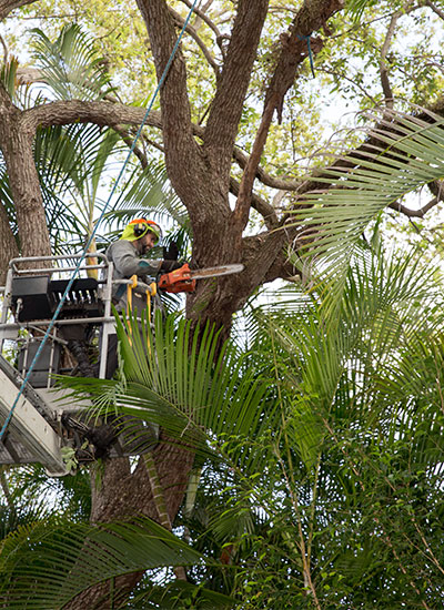 Tree trimming is one of the tree services Miami needs often.
