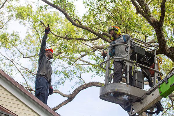 In Miami, tree trimming service is a frequent need after high winds.
