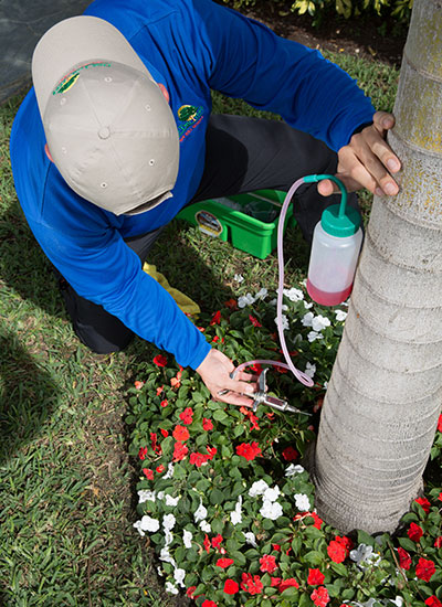 ArborJet has proven effective in saving a palm tree from dying.