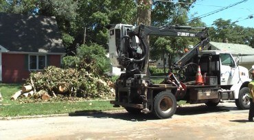 A tree dump is used to collect debris after a tree removal.