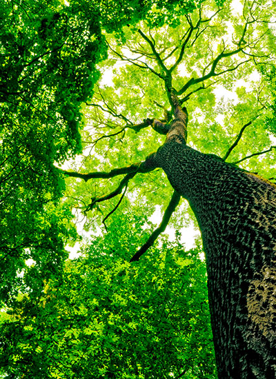 We provide tree trimming service, Miami and much of South Florida, to keep your trees healthy.