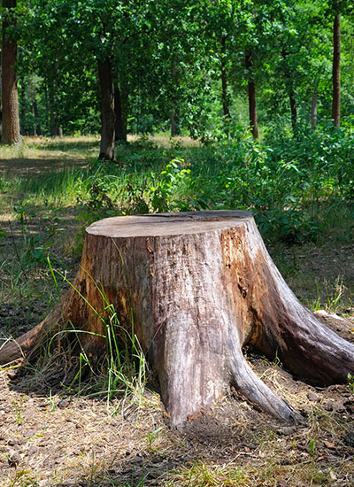 Stump removal is a tree service Miami residents will need from time to time.