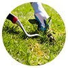 Weed control is a primary element of South Florida lawn care.