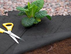 In South Florida, using a weed control mat can keep weeds from getting sunlight.