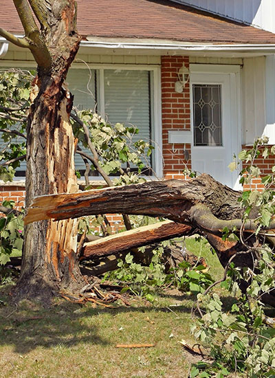 A tree can be removed to prevent a dying tree from falling and causing damage.