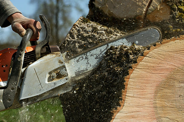 Tree removal in Miami can be due to disease of landscaping.